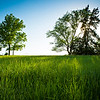 """A central Missouri pasture in late spring evening sun.<br /> <br /> Photo by Kyle Spradley 