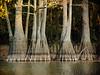 Allred Lake Natural Area