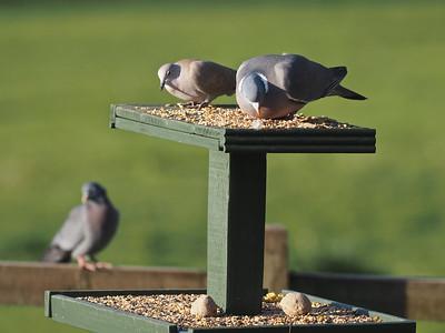 Bird table visitors