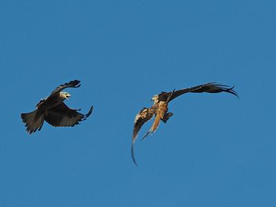 Kite play