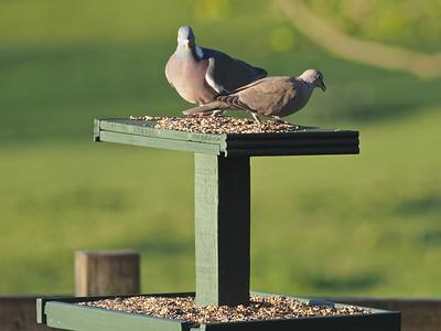 Enjoying the wild bird seed