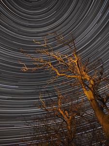 Tree pointing to Stars