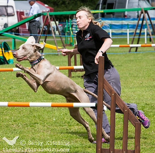 Bran at Lune Dog Agility Jun 2014