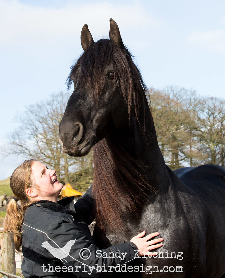 Friesian Experience with Drommie Feb 2015