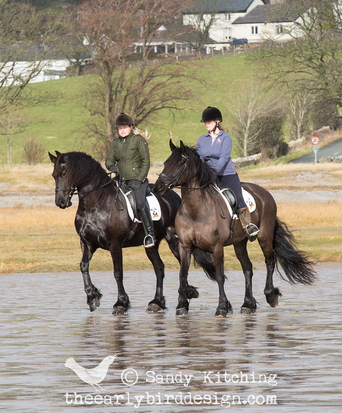 Friesian beach ride feb 2015