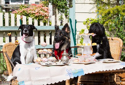 Pawcraft Party 2014