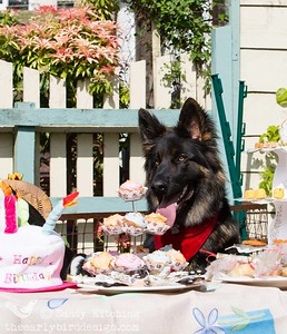 Ushba at Pawcraft Tea Party 2014