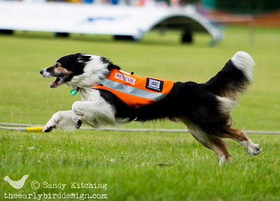 Rescue dog at Keswick Scruffs 2014