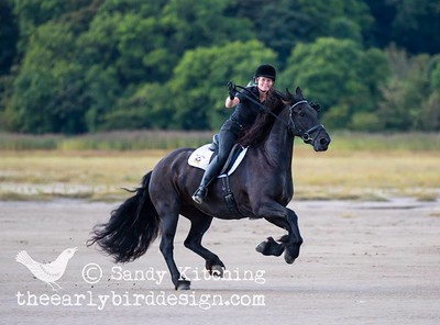 Friesian Experience beach ride 2014