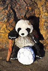 beach-panda-bear-3