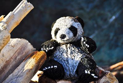 beach-panda-bear