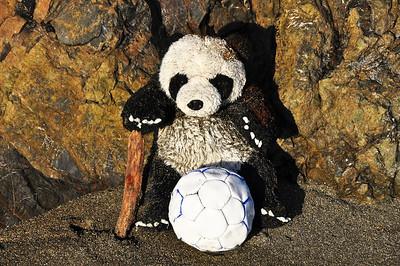 beach-panda-bear-4