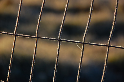 frozen-fence