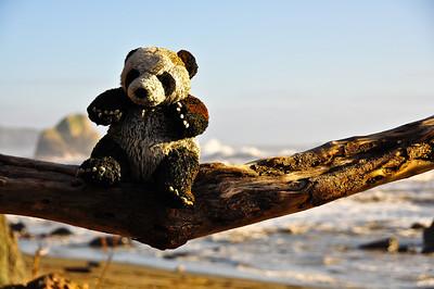 beach-panda-bear-2