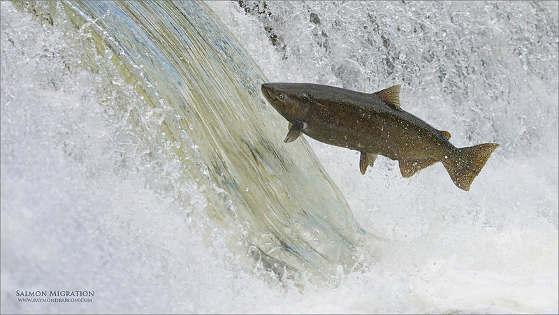 Another FIF!<br /> <br /> Fish in flight!
