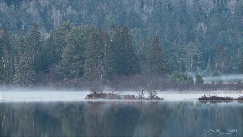 """I got a peaceful easy feelin""<br /> Eagles<br /> <br /> What a great place to enjoy the beauty of Nature.<br /> <br /> Algonquin Forest<br /> Ontario, Canada<br /> <br /> ray@raymondbarlow.com<br /> Nikon D850 ,Nikkor 200-400mm f/4G ED-IF AF-S VR<br /> 1/3s f/9.0 at 360.0mm iso64"