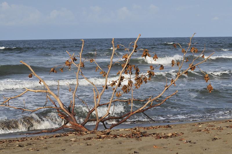 Atlantic / Carribean side of Costa Rica