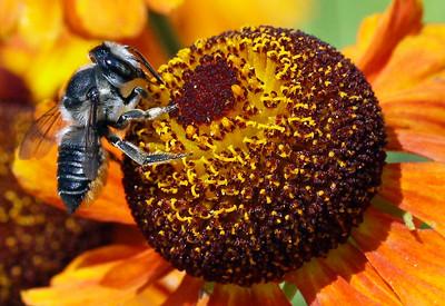 Bumble bee 5