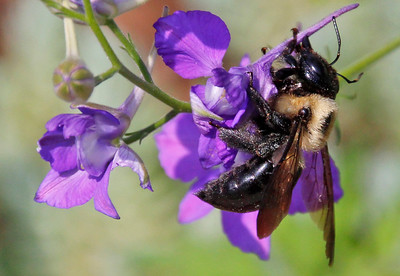 Bumble bee 28
