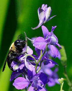 Bumble bee 8