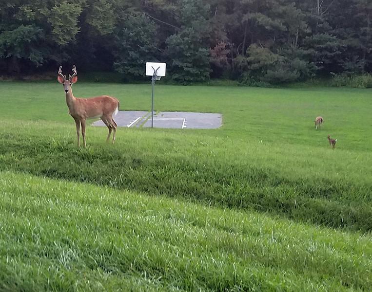 Basketball buck