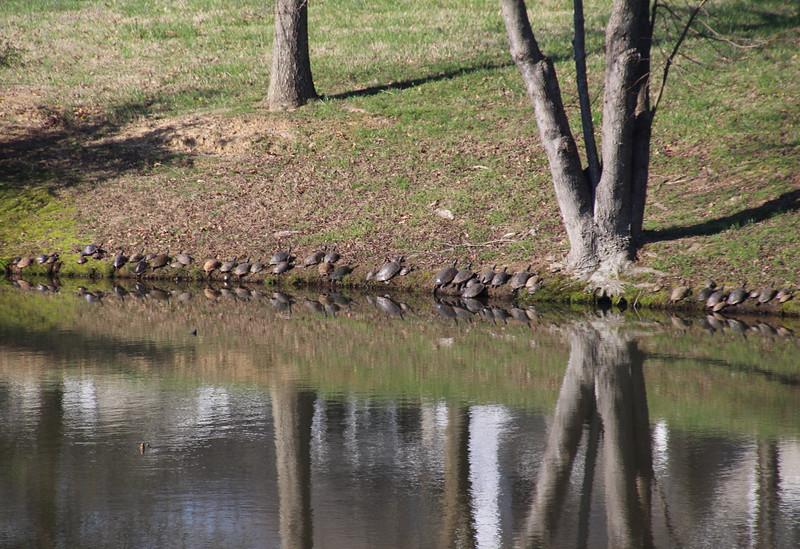 47 turtles