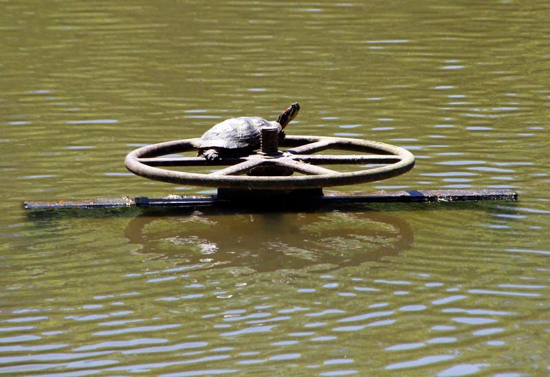 Turtle on wheel