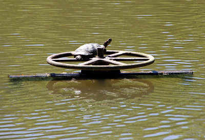 Turtle on wheel