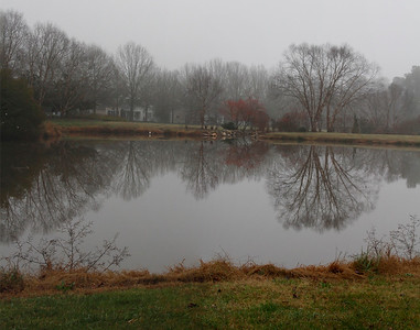 Grey pond