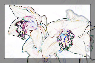 Orchid 1 - Find Edges
