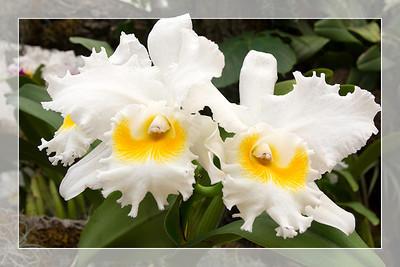 Orchid 2 - Original