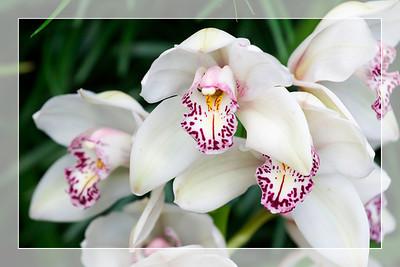Orchid 4 - Original