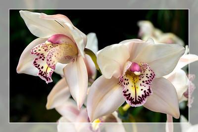Orchid 1 - Original