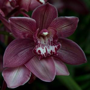 Orchid Show IX