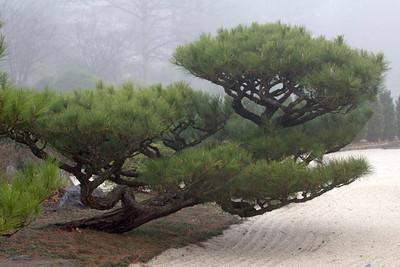 Japanese Garden evergreens over rock garden