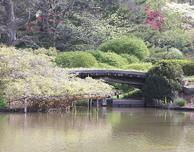 Back bridge to Sacred Island, Japanese Garden