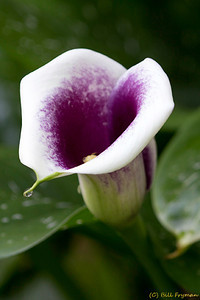 Flower with water droplet