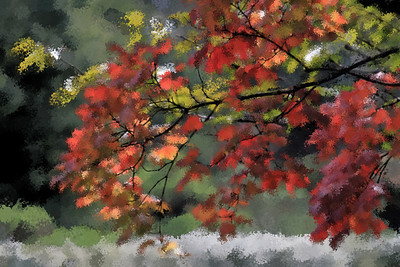 Japanese Garden Maple