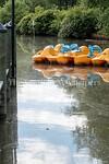 6/27/2017 - Paddle boats at Lake Whetstone, Montgomery Village, MD, �2017 Jacqui South Photography