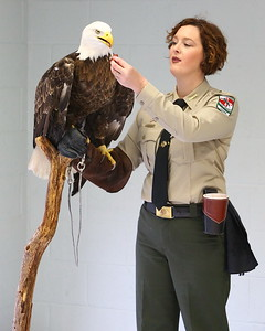 "George P. Smith/The Montgomery Sentinel    Maryland Park Service Ranger Jessica Conley was on hand at Brookside Gardens with the bald-eagle Buchanan for   . Buchanan was found injured in Pennsylvania and is no longer able to fly, ""Buck"", as he is affectionately know, is now a permanent resident of the Tuckahoe aviary and helps rangers to educate the public on the human impact to wildlife.  See https://www.chesapeakebay.net/news/blog/unseen_danger_leads_to_eagle_deaths"