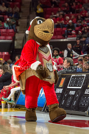 12/10/2016 - University of Maryland mascot Terrapin in the St. Peter's v University of Maryland Basketball, ©2016 Jacqui South Photography