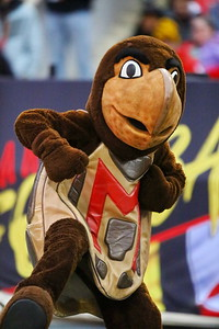George P. Smith/The Montgomery Sentinel    University of Maryland's mascot Testudo.