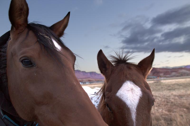 Sorrel River Ranch Horses