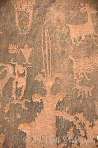 Moon Flower Canyon petroglyphs