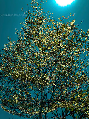 Backlit photo of a tree