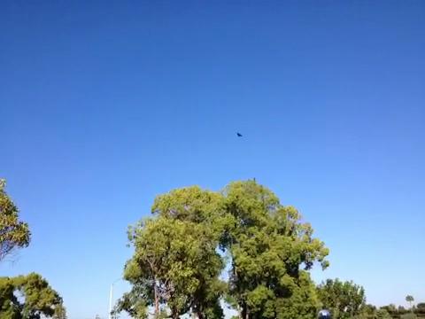 Crow Mayhem