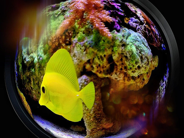 Fisheye fisheye - iPhone photo
