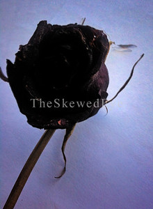 The Black Rose  I nabbed this off my Mom's casket.   I hope she forgives me for making her wear that outfit she hated so much for all eternity, but it was stylish, classy and went beautifully with that hand carved red cherry Caddilac of a casket!  As I was looking around for crapcam fodder this afternoon, I think it was she that led me to that AHA moment.