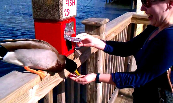 Feeding the ducks in Myrtle Beach