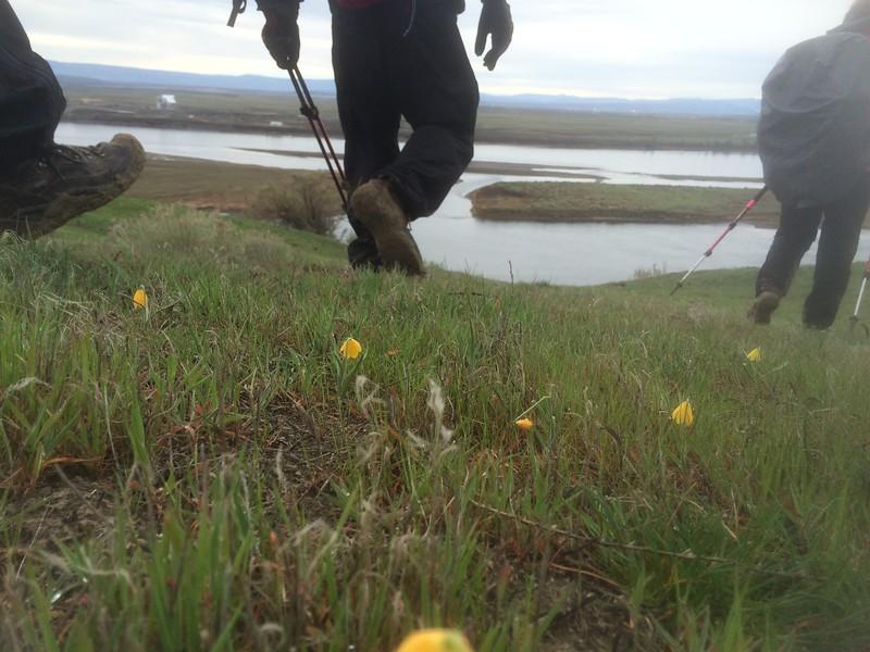 South Hanford Reach Hike 3/15